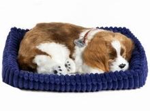 Perfecte hond King Charles -spaniël-