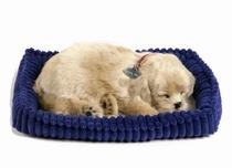 Perfecte hond Golden Retriever